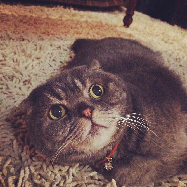 Cさまの愛猫さん