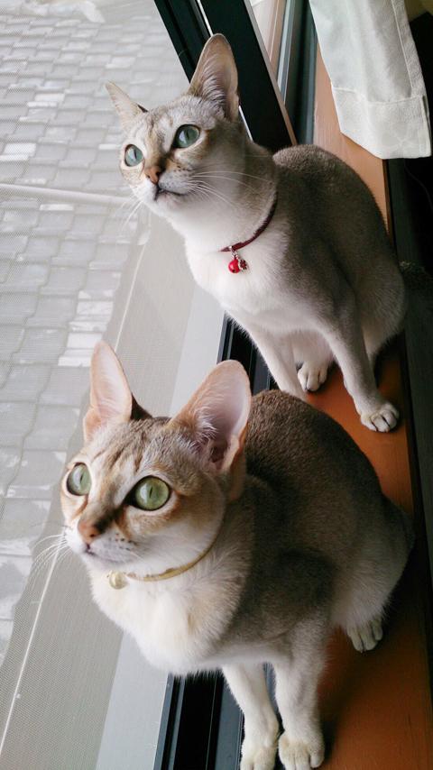 ココ&ルル