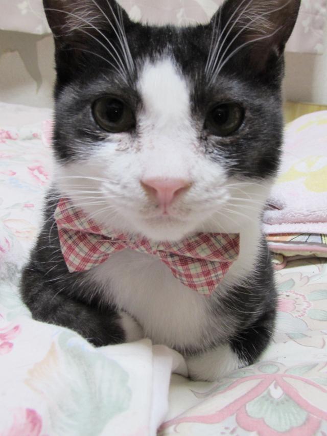 くみこ様愛猫さん