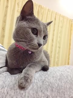 猫臭(ねこしゅう)さん♪