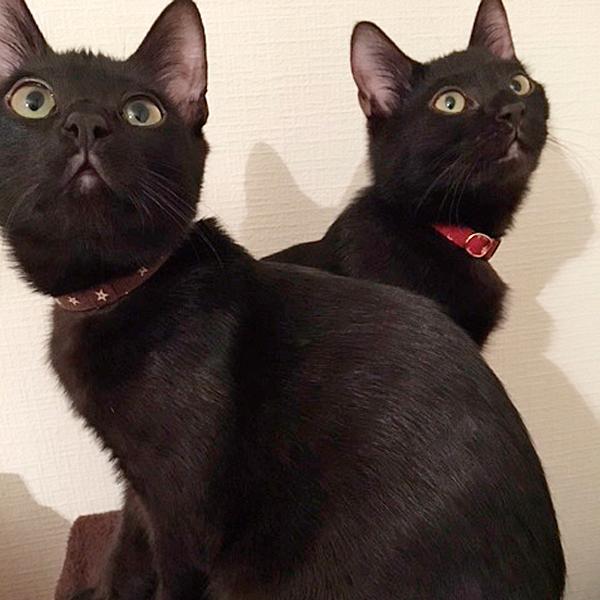 小太郎&鈴太郎さん♪