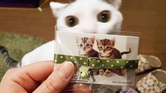 兵庫県愛猫さん♪