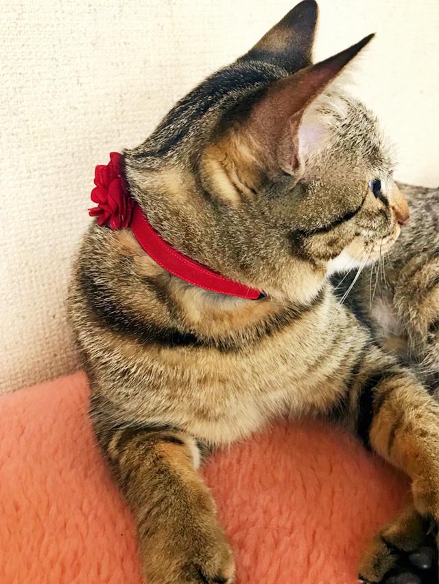 奈良県愛猫さん
