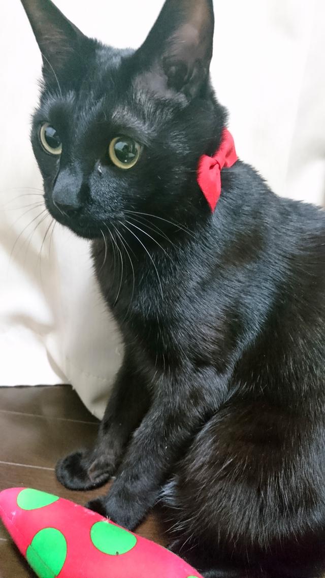 タンタンさん♪(黒、雄 1才11ヶ月)