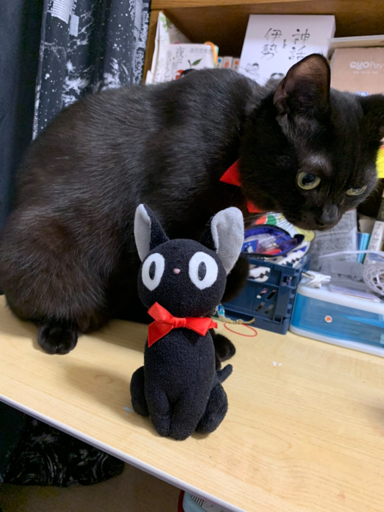 大阪府 黒猫の愛猫さん♪