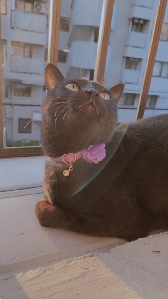 東京都・愛猫さん♪